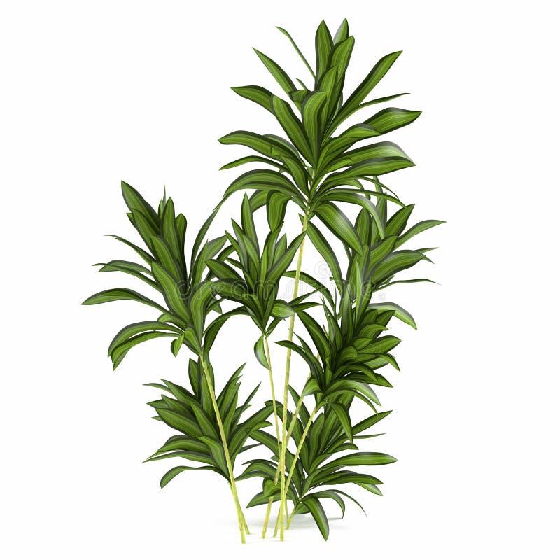 Gömma i handflatan växtbusken royaltyfri illustrationer
