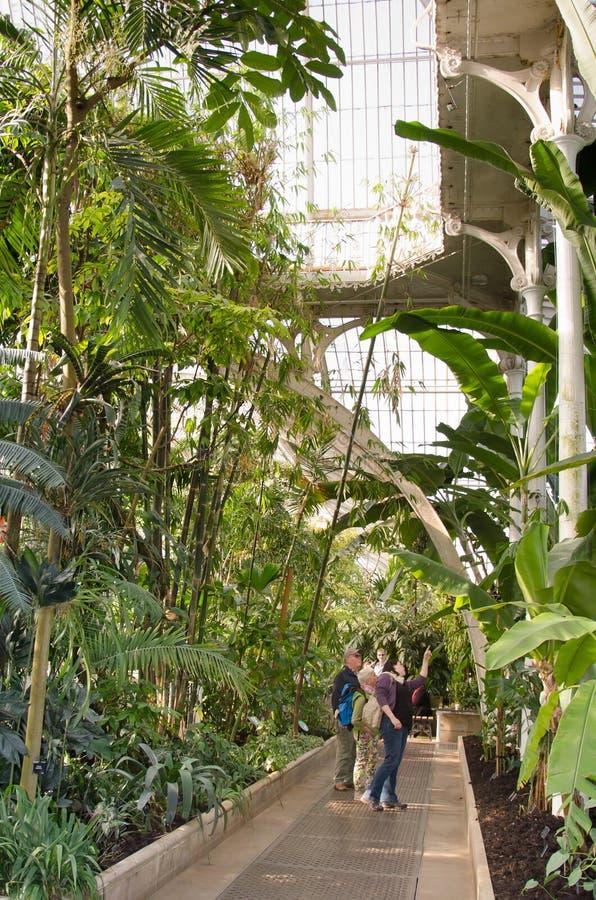 Gömma i handflatanhuset, Kew trädgårdar, London UK. fotografering för bildbyråer