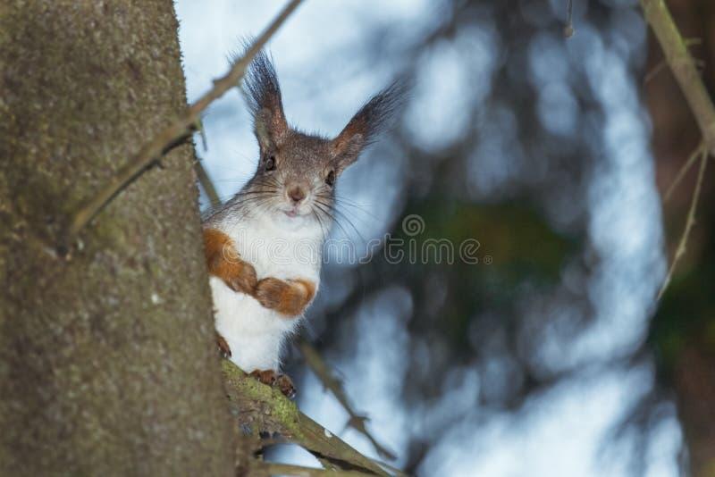 Gömma sig på treen royaltyfri foto