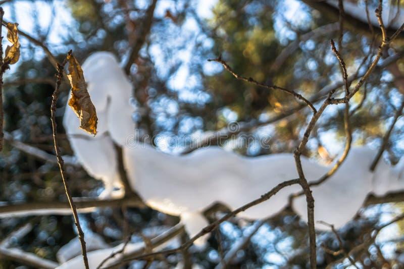 Gör bar filialer av träd i solig region för vinterskogMoskva royaltyfri foto