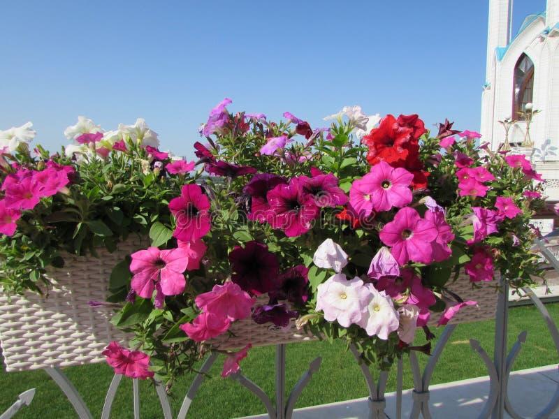 gör blommor henne förälskelsemeddelandet mycket owkruka dig arkivbilder