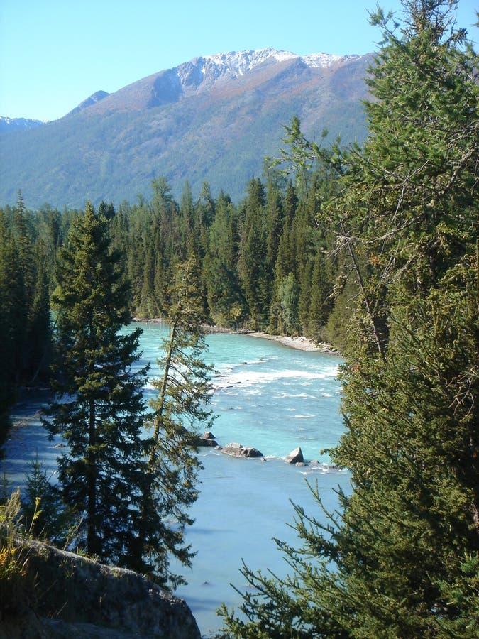 gör ren den rena floden royaltyfria bilder