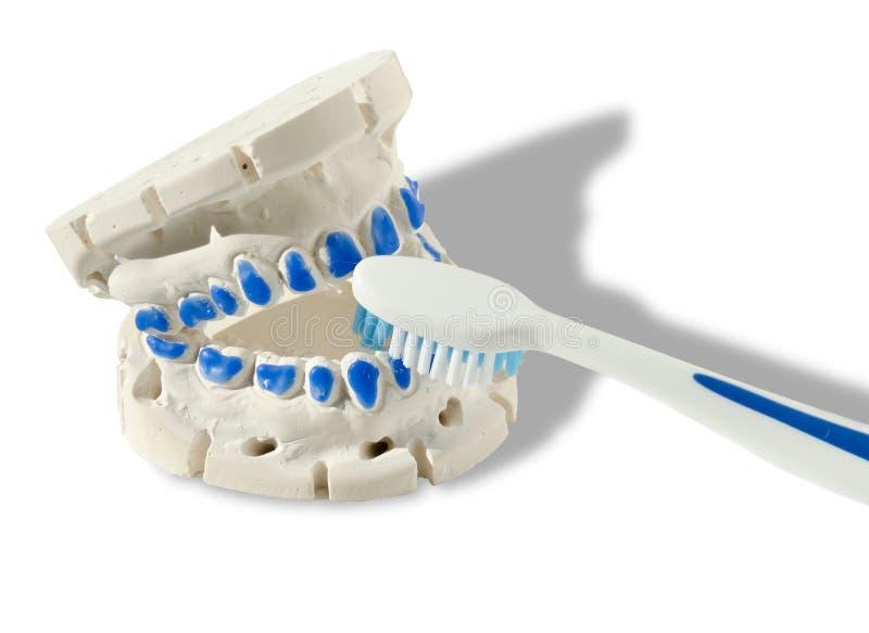 Gör ren dina tänder eller annars! arkivbilder