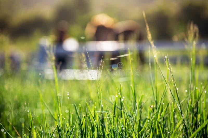 Gör suddig hästar i bakgrund och gräs med morgondagg på förgrund, den gröna ängen för hästar med ett stall arkivfoton
