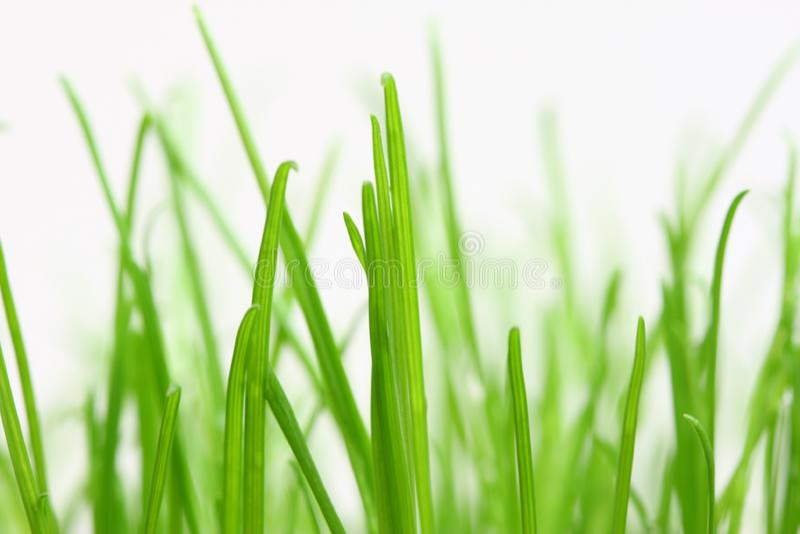 Göra grön gräs arkivbild