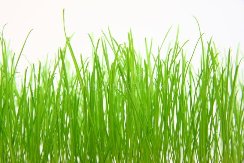 Göra grön gräs arkivfoton