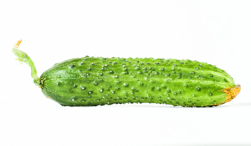 Göra grön gurkan royaltyfri bild