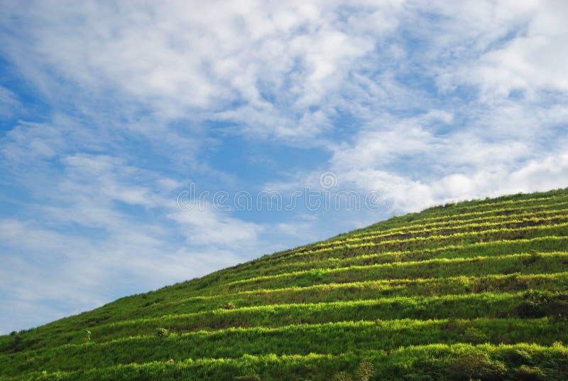 Göra grön kullen arkivfoton