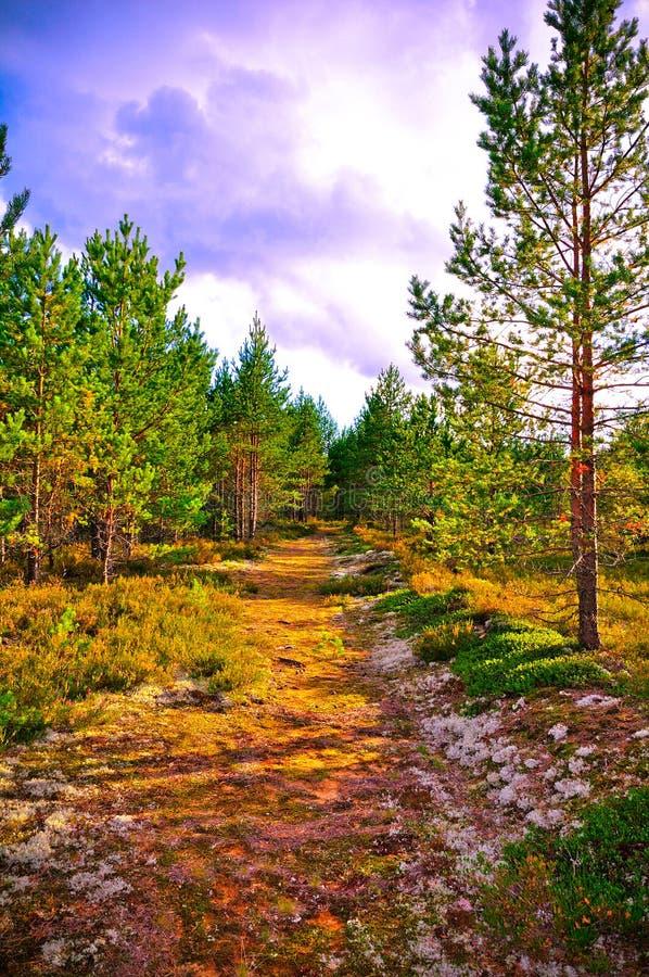Göra grön naturen royaltyfri foto