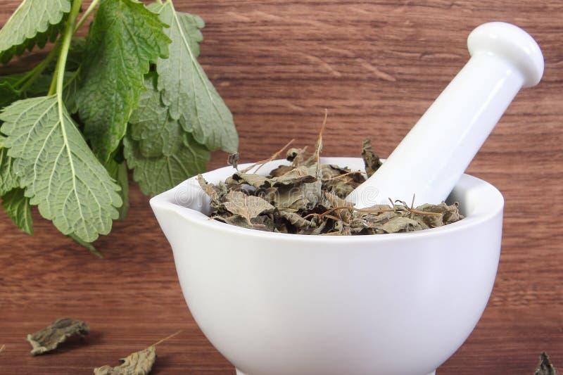 Göra grön och torkade citronbalsam med mortel, begrepp av herbalism och alternativ medicin royaltyfria bilder