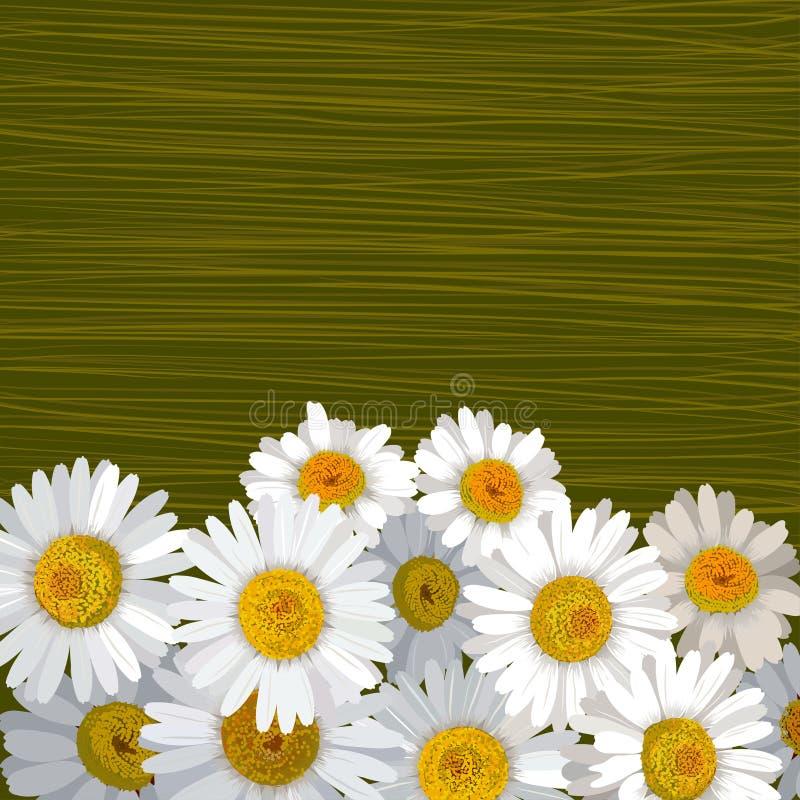 Göra grön randig bakgrund med många blommor av kamomill stock illustrationer