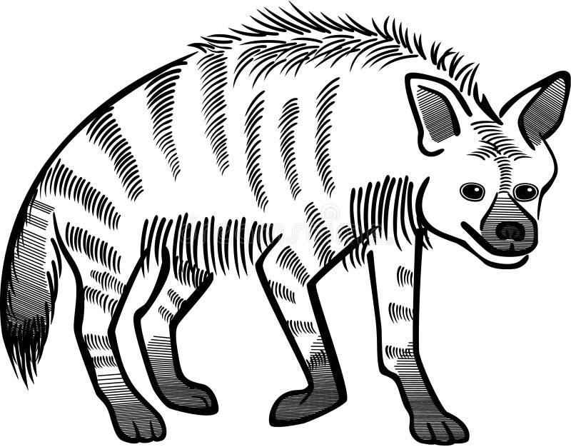 görad randig hyena royaltyfri illustrationer
