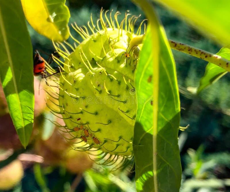 Gąsienicowy czołganie na cierniowatej roślinie fotografia stock
