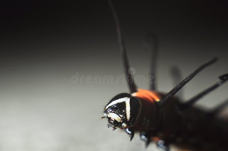 Gąsienicowy makro- kolor fotografia royalty free