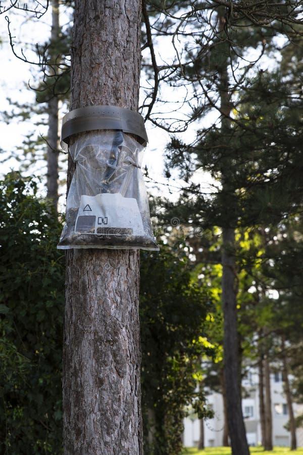Gąsienicowy oklepiec na drzewie zdjęcie stock