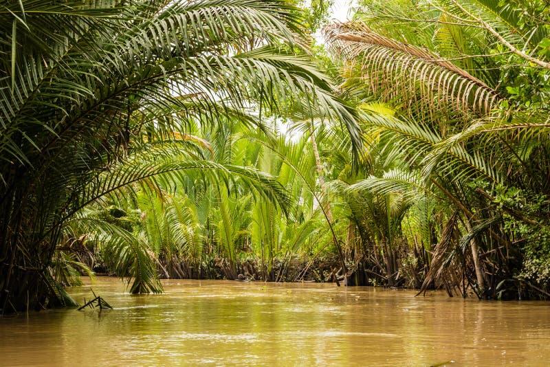 Gęsta dżungla w Mekong delcie, Wietnam obraz royalty free