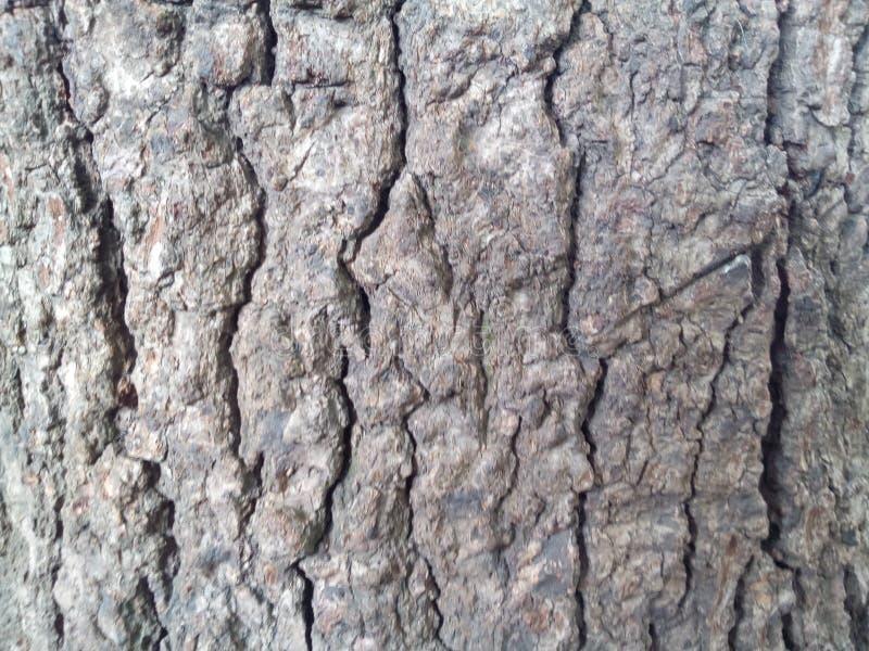Gęsta horyzontalna drzewna barkentyna zdjęcia royalty free