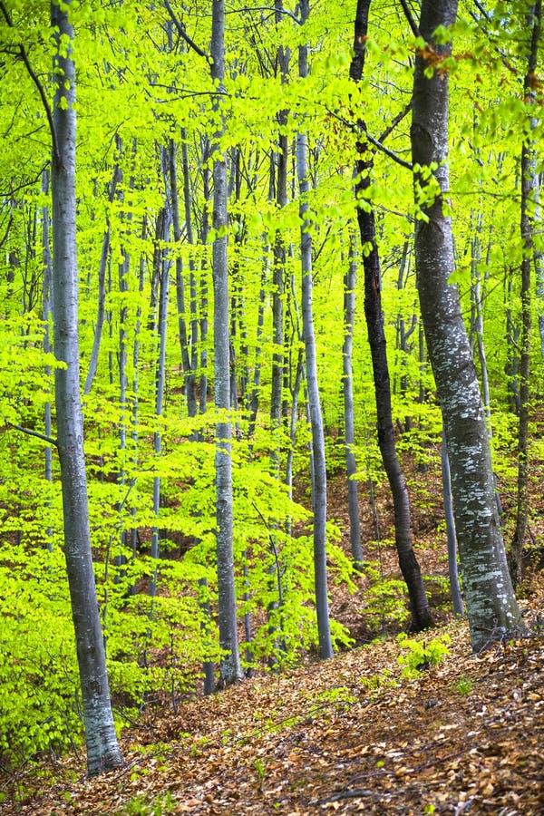 gęste drzewa obraz stock