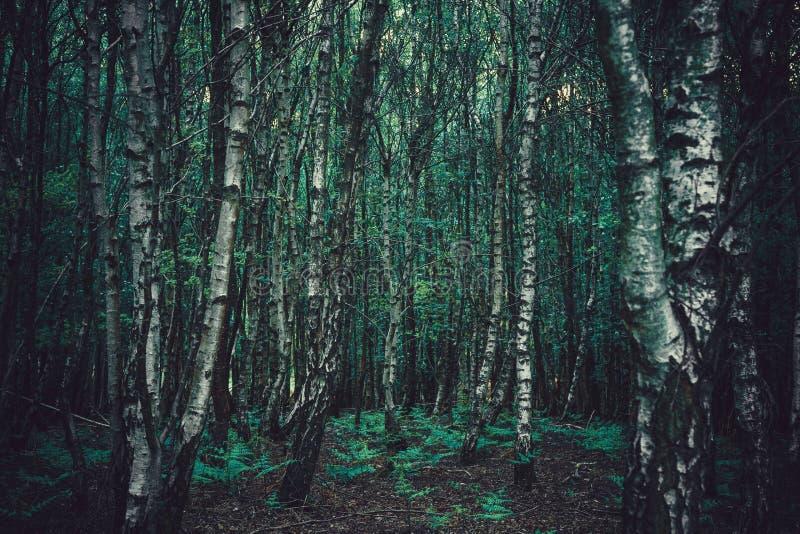 gęste drzewa leśne zdjęcie stock