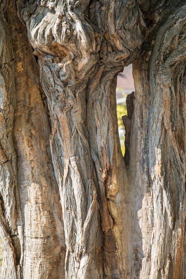 Gęsty drzewnego bagażnika zbliżenie obraz royalty free