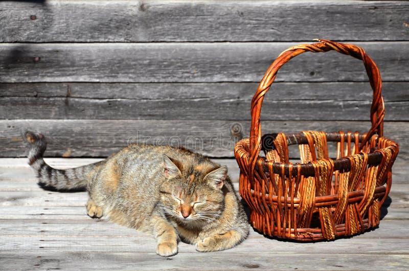 Gęsty kot lokalizują obok łozinowego kosza pustych kłamstw na a obraz royalty free