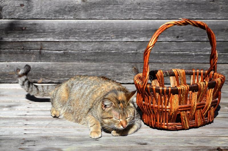 Gęsty kot lokalizują obok łozinowego kosza pustych kłamstw na a obraz stock