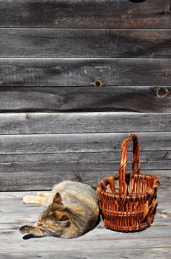 Gęsty kot lokalizują obok łozinowego kosza pustych kłamstw na a fotografia royalty free