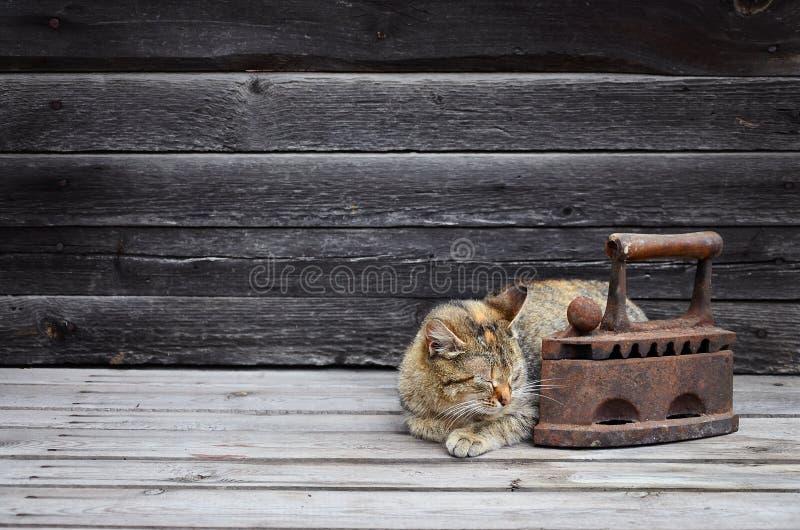 Gęsty kot lokalizują obok ciężkiego i ośniedziałego starego węgla żelaza o zdjęcie stock