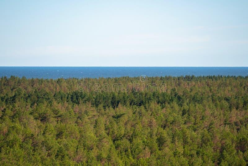 Gęsty las morski Dzika plaża z wieloma drzewami przy oceanie Eksploracja natury w słoneczny dzień, czyste niebo, miejsce na kopio obrazy stock