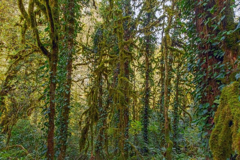 Gęsty mech na gałąź boxwood Sochi park narodowy zdjęcia royalty free