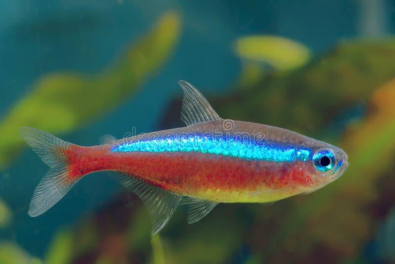 Główna ryba zdjęcie stock