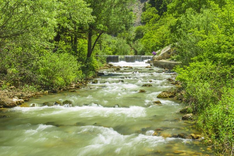 Główny źródło naturalna woda od gór zdjęcia royalty free