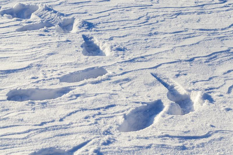 Głębocy śniegów dryfy zdjęcie stock