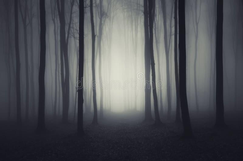 Głębocy ciemni drewna na Halloweenowej nocy zdjęcia stock