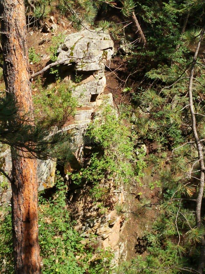 Głębocy drewna Kolorado obrazy royalty free