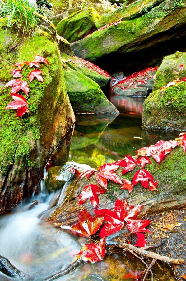głęboka dżungla leafs klonowa czerwień zdjęcia stock