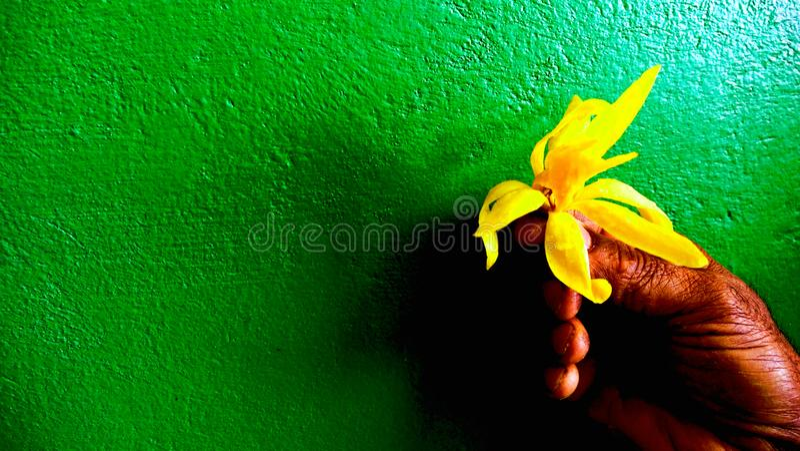 Głęboka - kolor żółty na Głębokim - zielona tapeta zdjęcie stock