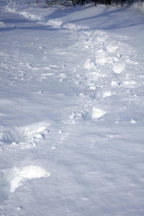 Głęboki Śnieżny spacer zdjęcia royalty free