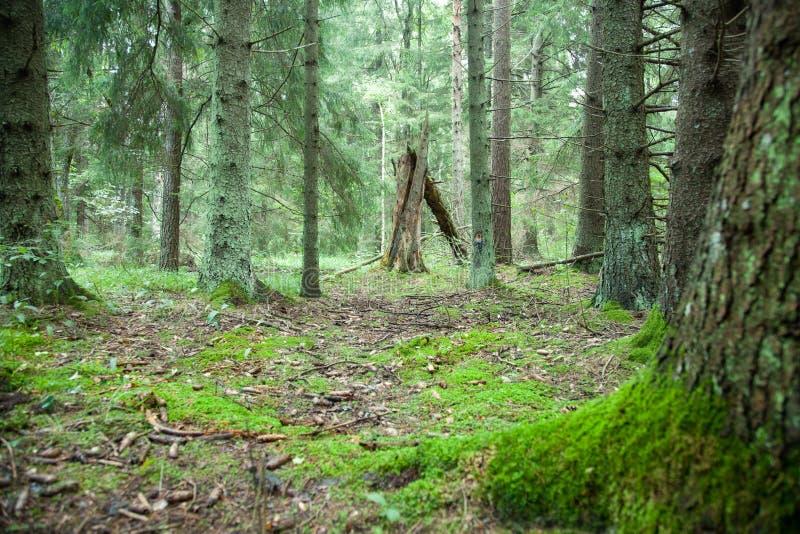 Głęboki las obrazy royalty free