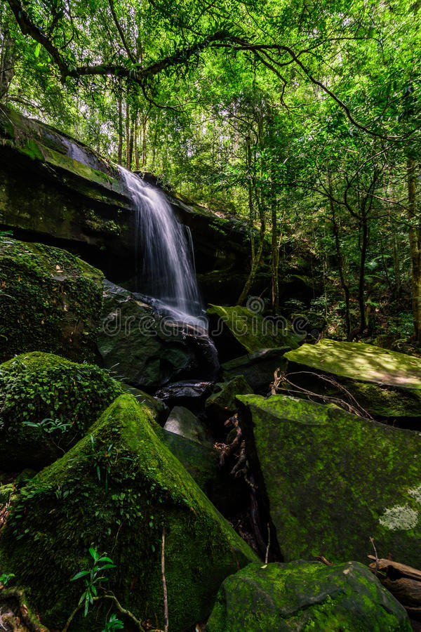 Głęboki lasowy siklawy Phu Kradueng park narodowy, Tajlandia zdjęcie royalty free