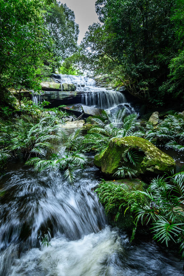 Głęboki lasowy siklawy Phu Kradueng park narodowy, Tajlandia obrazy royalty free