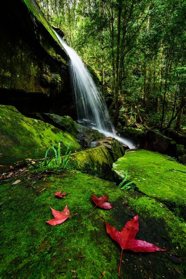 Głęboki lasowy siklawy Phu Kradueng park narodowy, Tajlandia obrazy stock
