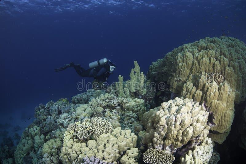 głęboki nurka rekonesansowy rafowy morza fotografia royalty free