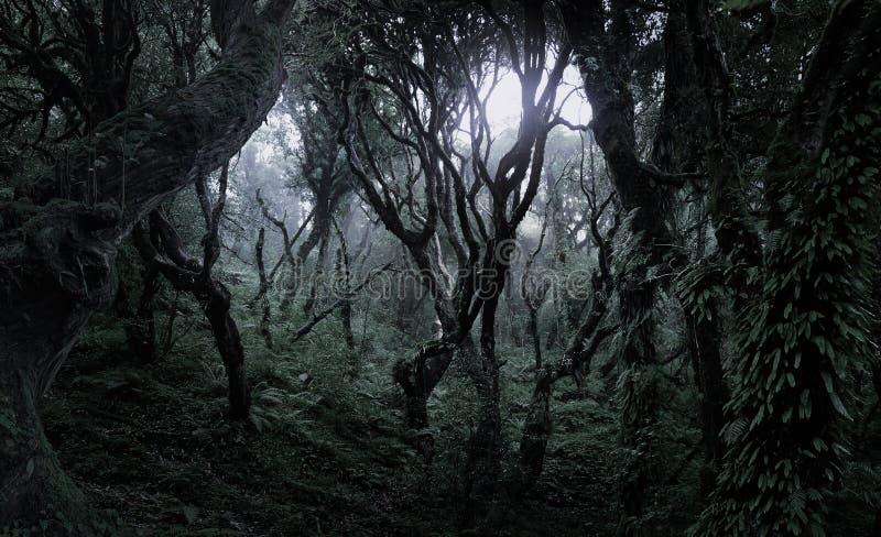 Głęboki tropikalny las w ciemności zdjęcie stock