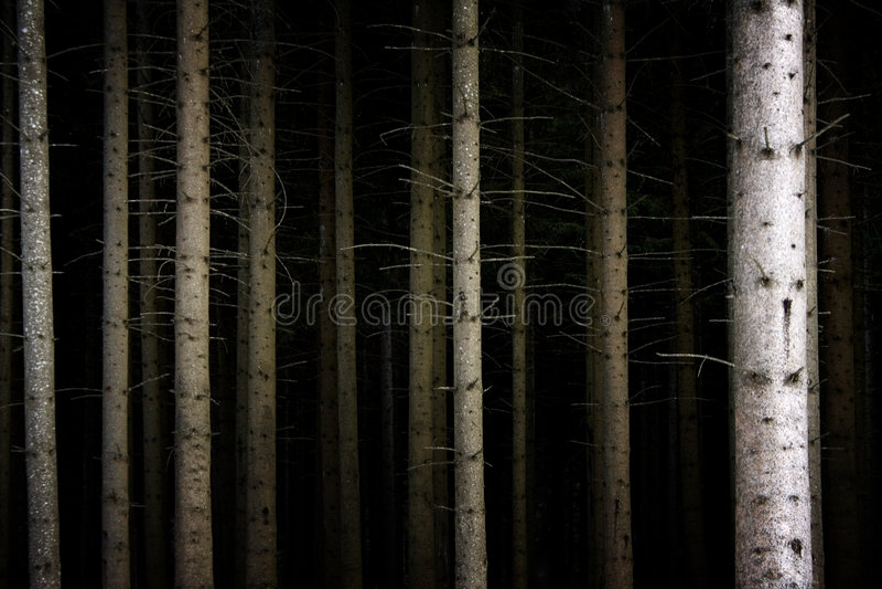 głębokie ciemności las zdjęcia stock