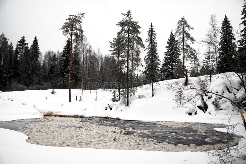 głębokiego wieczór lasowa jeziorna zima zdjęcia royalty free