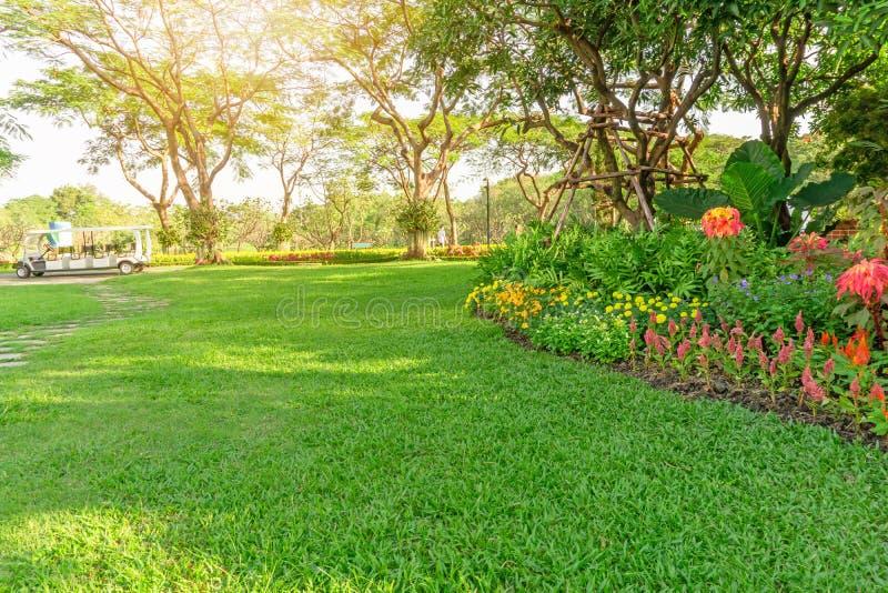 Gładzi zielonej trawy gazon w dobrym opieki utrzymania ogródzie, kwiatonośnej roślinie, shurb i drzewach na podwórko, pod ranku ś obraz stock