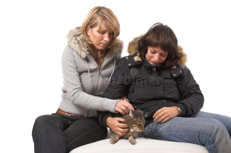 głaskanie kota obrazy stock