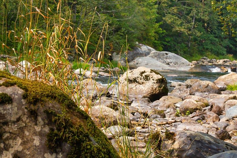 Głaz r mech i wysokiej świrzep blisko krawędzi zielona rzeka w wa obraz royalty free