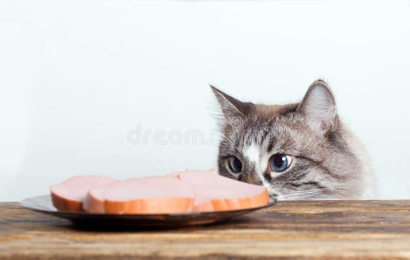 Głodny chytry kot obrazy royalty free